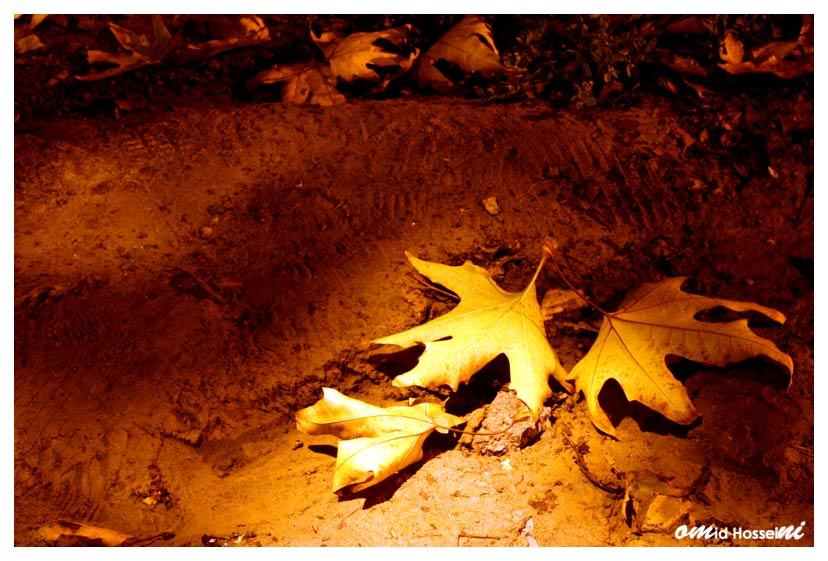 برگ هاي زرد پائيز (اميد حسيني)